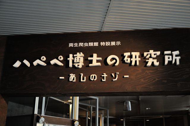 両生爬虫類館の特設展示・2017_c0081462_08592833.jpg