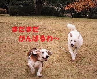 f0121712_00312780.jpg