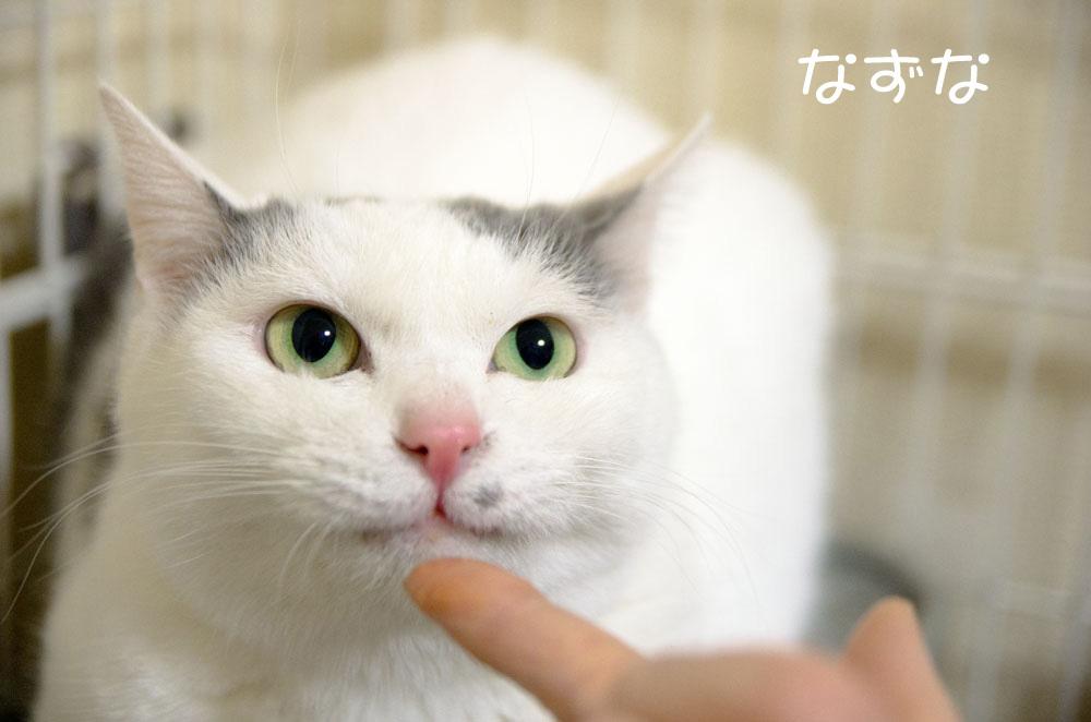 1月1日、猫の日。_f0152939_06470881.jpg
