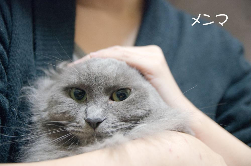 1月1日、猫の日。_f0152939_06472510.jpg