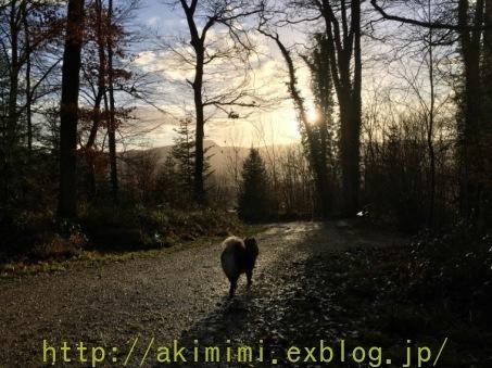 b0245488_19341544.jpg