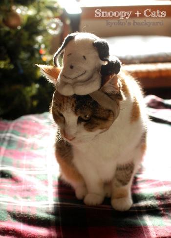 偽スヌーピーと猫 その1_b0253205_05113167.jpg