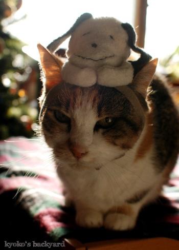 偽スヌーピーと猫 その1_b0253205_05115184.jpg