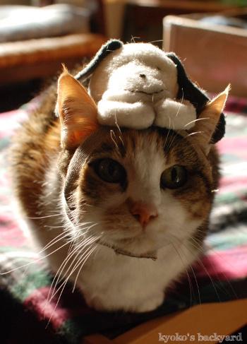 偽スヌーピーと猫 その1_b0253205_05120923.jpg