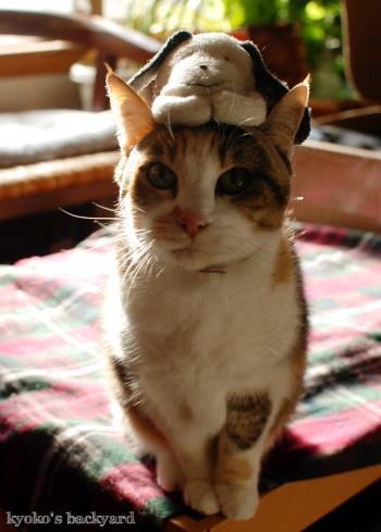 偽スヌーピーと猫 その1_b0253205_05122250.jpg
