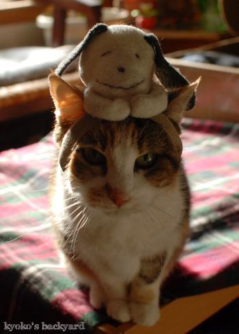 偽スヌーピーと猫 その1_b0253205_05123542.jpg