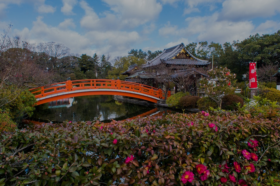 神泉苑の山茶花_e0363038_13521021.jpg