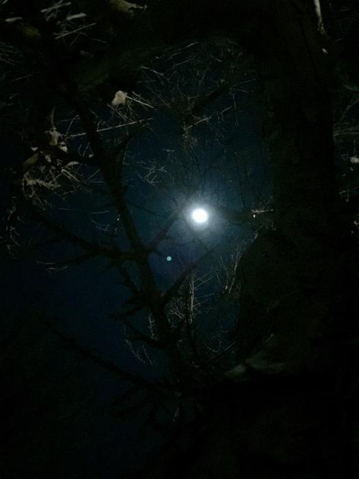 お月様の灯り_d0105967_20104203.jpg