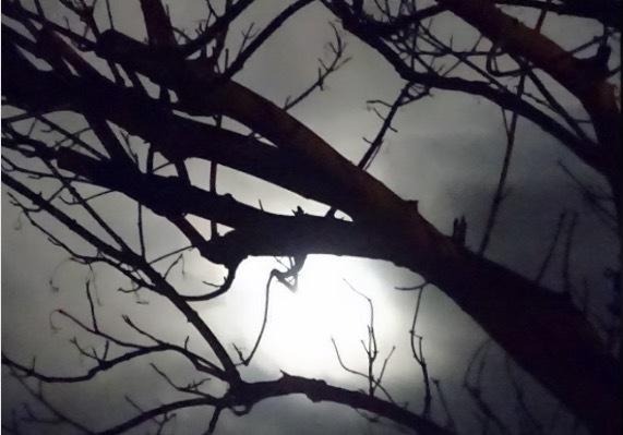 お月様の灯り_d0105967_20265475.png