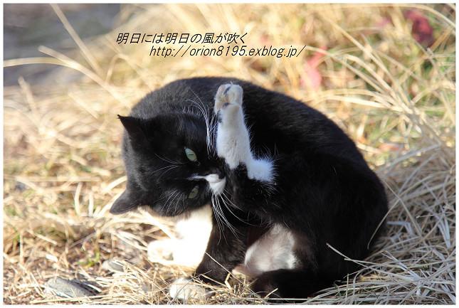 f0361079_20085276.jpg