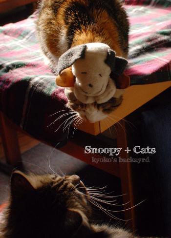 偽スヌーピーと猫 その2_b0253205_04553320.jpg