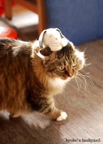 偽スヌーピーと猫 その2_b0253205_04563981.jpg