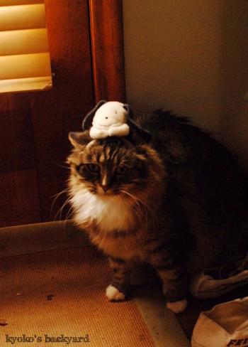 偽スヌーピーと猫 その2_b0253205_05055661.jpg