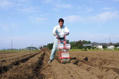 有機栽培の水田ごぼう 現在の発芽の様子と水田での栽培ならではのごぼうなんです!(後編)_a0254656_17042770.jpg