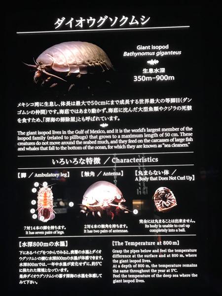 沼津港深海水族館 また行ってきた その11 ダイオウグソクムシは美味しいらしい_d0068664_20070859.jpg