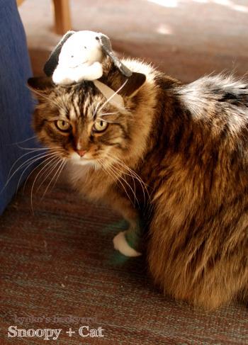 偽スヌーピーと猫 その3_b0253205_04125381.jpg