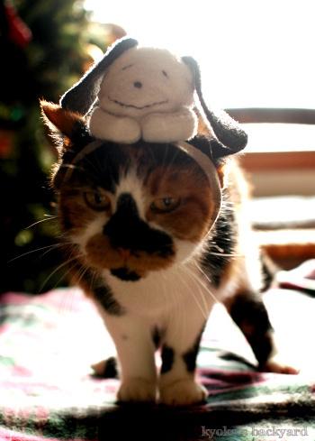 偽スヌーピーと猫 その3_b0253205_04131007.jpg
