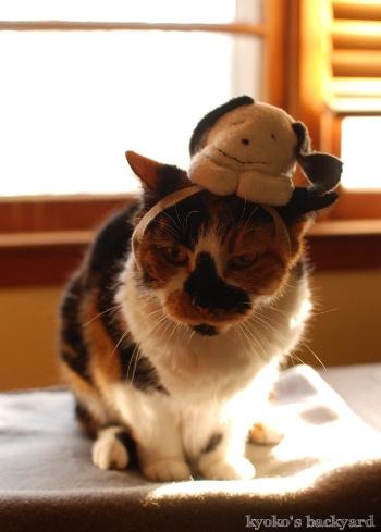 偽スヌーピーと猫 その3_b0253205_04133662.jpg