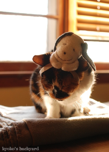 偽スヌーピーと猫 その3_b0253205_04135054.jpg