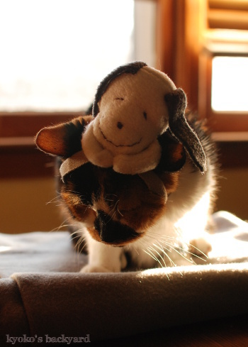 偽スヌーピーと猫 その3_b0253205_04140254.jpg