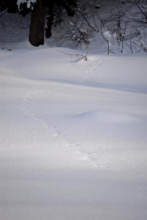 冬休み_a0128408_13534097.jpg