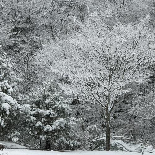 積雪中_e0179508_09340927.jpg