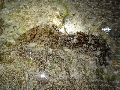 真夜中のカーミージーの海_c0180460_00001567.jpg