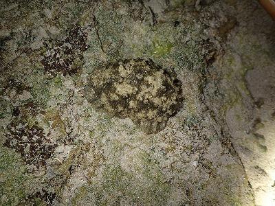 真夜中のカーミージーの海_c0180460_00035497.jpg