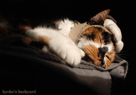 偽スヌーピーと猫 その4_b0253205_05544626.jpg