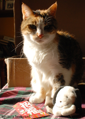偽スヌーピーと猫 その4_b0253205_05560466.jpg
