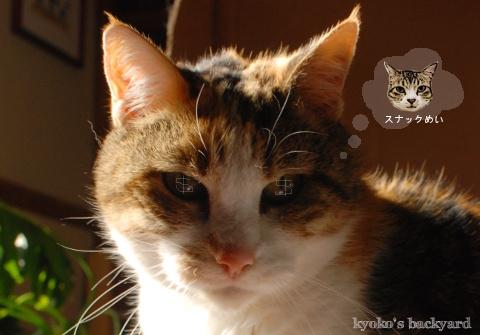 偽スヌーピーと猫 その4_b0253205_06045562.jpg