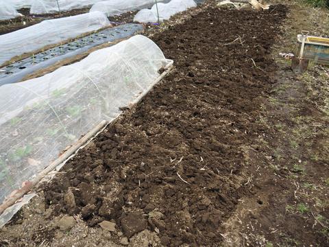 六国見山の畑の仕事始めは春キャベツ追肥と寒起こし1・5_c0014967_17454570.jpg