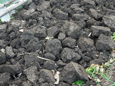 六国見山の畑の仕事始めは春キャベツ追肥と寒起こし1・5_c0014967_1746237.jpg