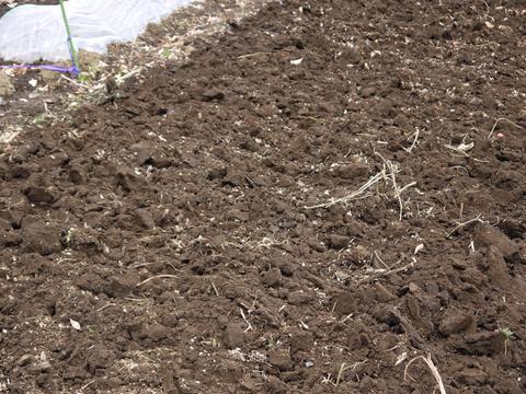 六国見山の畑の仕事始めは春キャベツ追肥と寒起こし1・5_c0014967_1746347.jpg