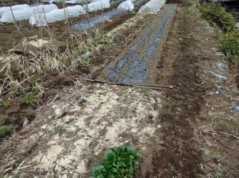 六国見山の畑の仕事始めは春キャベツ追肥と寒起こし1・5_c0014967_17522069.jpg