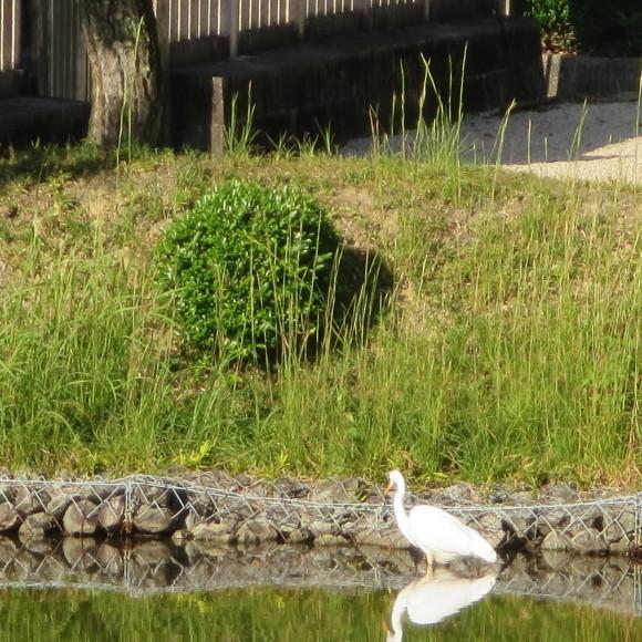 秋篠町から近鉄奈良駅方面に歩いて行く佐紀・佐保おさらいブログ 2 奈良市_c0001670_19150030.jpg