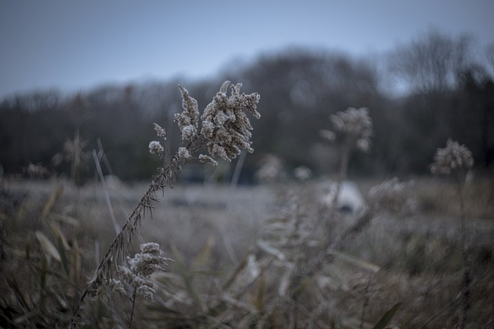 Winter Countryside_d0353489_18453354.jpg
