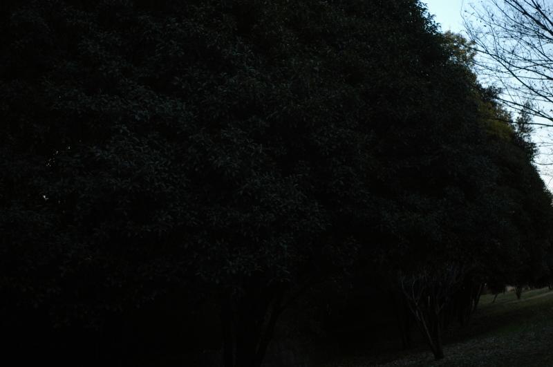 f0175998_22130821.jpg