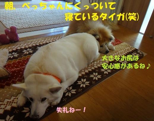 f0121712_00264636.jpg