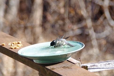 野鳥の水浴_f0163491_21220107.jpg