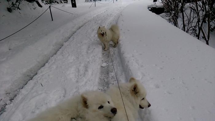 今年初の雪遊び_a0049296_10164982.jpg