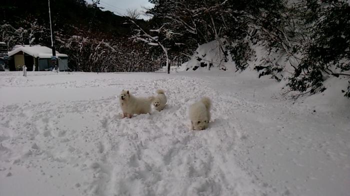 今年初の雪遊び_a0049296_10170662.jpg