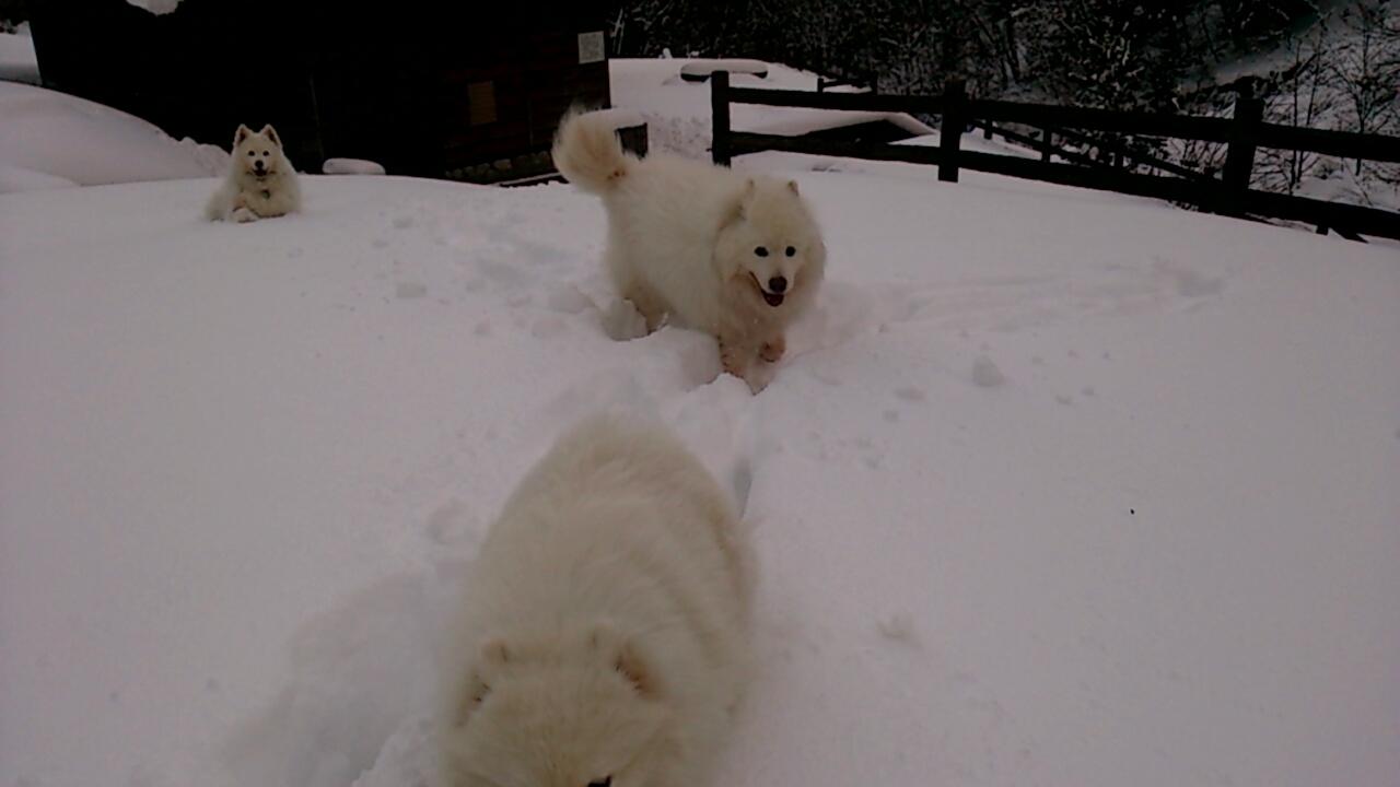 今年初の雪遊び_a0049296_10193756.jpg