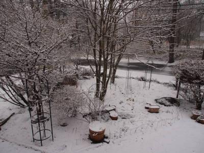 雪です_a0129867_140517.jpg