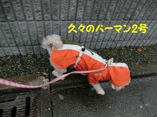 d0353074_16091219.jpg