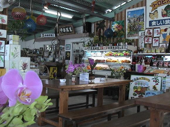 石垣島のトンボ!_a0268377_19331482.jpg