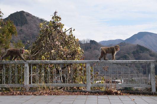 丹沢に行ってきた_c0162128_15201694.jpg