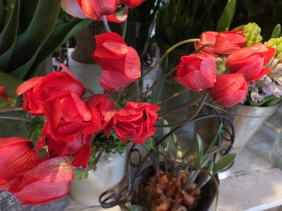 オークリーフ(初春の花)_f0049672_18001434.jpg