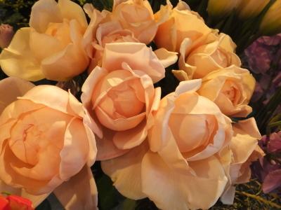 オークリーフ(初春の花)_f0049672_18023631.jpg