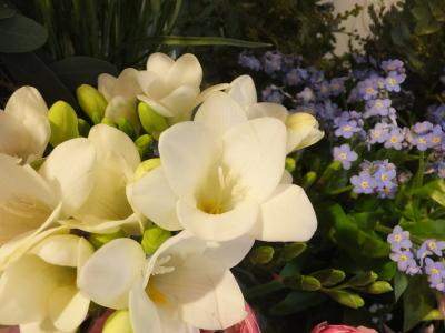オークリーフ(初春の花)_f0049672_18032131.jpg